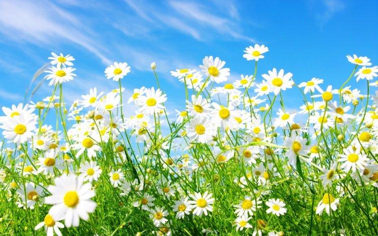 Bahar Temizliği