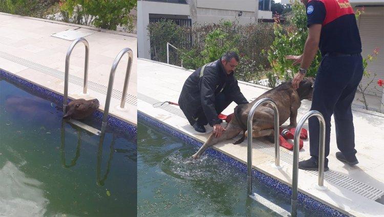 Yüzme Havuzuna Düştü!