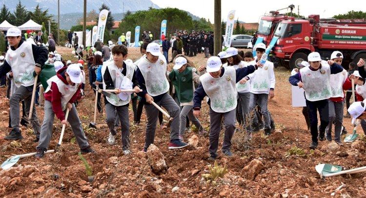 Muğla'da 200 Bin Çamı Fidanı Toprakla Buluşturuldu